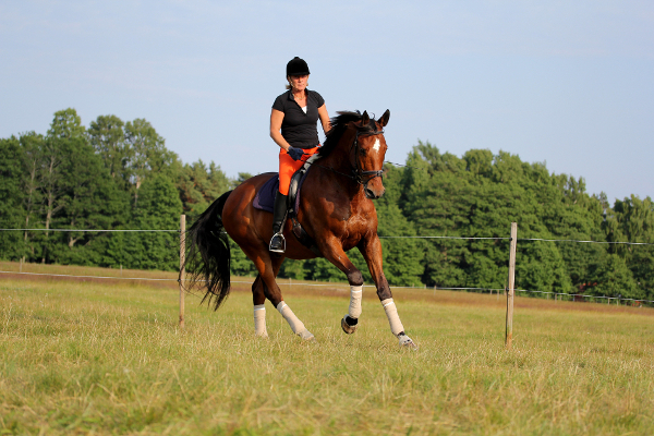 Häst Försäljning på Herrhamra Gård